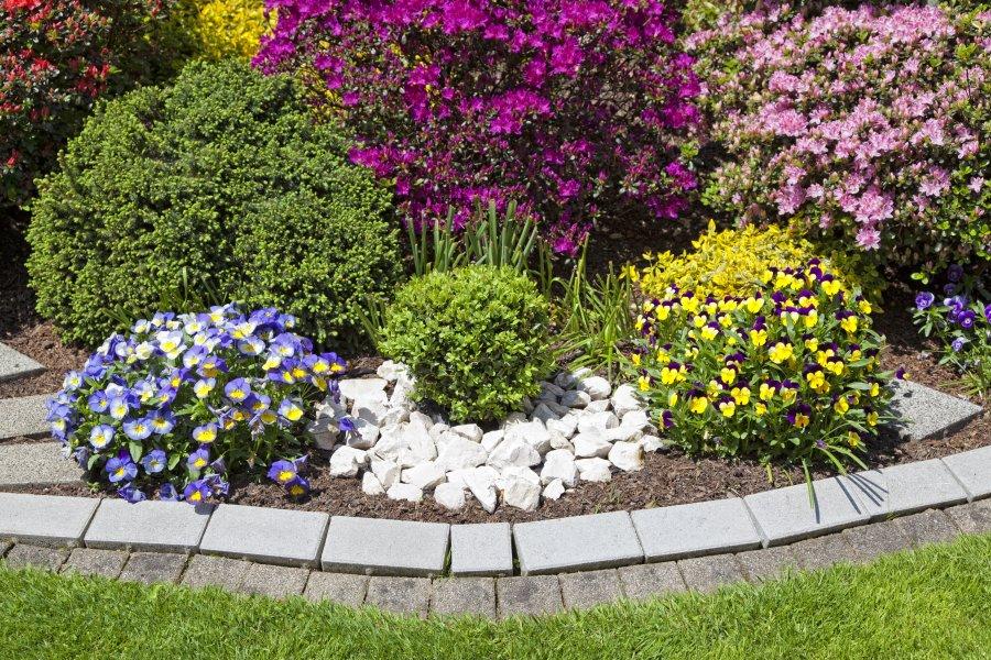 De jardines madrid fabulous dalias en flor en el jardn for Limpieza de jardines madrid